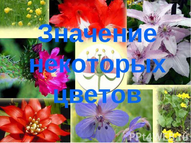 Значение некоторых цветов