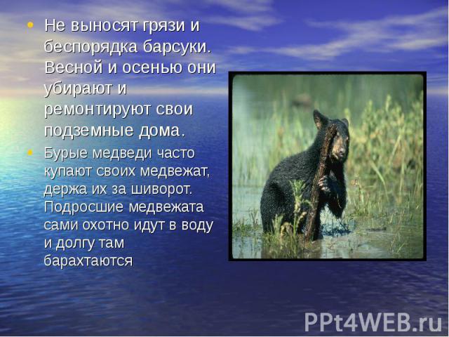 Не выносят грязи и беспорядка барсуки. Весной и осенью они убирают и ремонтируют свои подземные дома.Бурые медведи часто купают своих медвежат, держа их за шиворот. Подросшие медвежата сами охотно идут в воду и долгу там барахтаются
