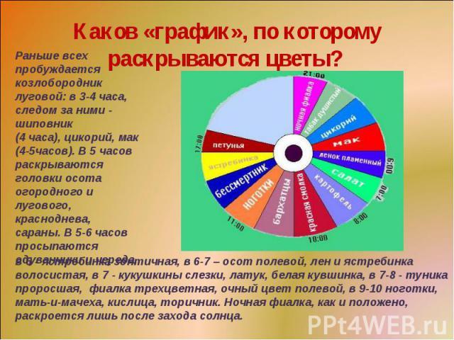 Каков «график», по которому раскрываются цветы? Раньше всех пробуждается козлобородник луговой: в 3-4 часа, следом за ними - шиповник (4 часа), цикорий, мак (4-5часов). В 5 часов раскрываются головки осота огородного и лугового, красноднева, сараны…