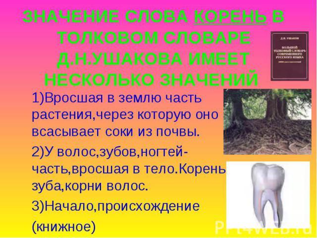 ЗНАЧЕНИЕ СЛОВА КОРЕНЬ В ТОЛКОВОМ СЛОВАРЕ Д.Н.УШАКОВА ИМЕЕТ НЕСКОЛЬКО ЗНАЧЕНИЙ 1)Вросшая в землю часть растения,через которую оно всасывает соки из почвы.2)У волос,зубов,ногтей-часть,вросшая в тело.Корень зуба,корни волос.3)Начало,происхождение(книжное)