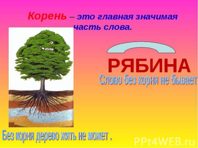 Корень – это главная значимая часть слова.РЯБИНАСлово без корня не бывает.Без корня дерево жить не может .