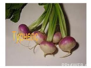 Турнепс