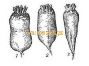 Типы корнеплодов