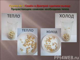 Группа № 3 Семён и Дмитрий сделали вывод: Прорастающим семенам необходимо тепло