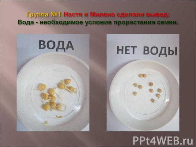 Группа №1 Настя и Милена сделали вывод: Вода - необходимое условие прорастания семян.
