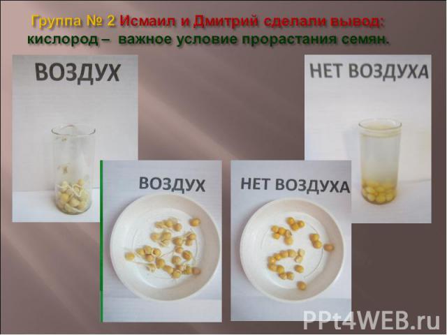 Группа № 2 Исмаил и Дмитрий сделали вывод: кислород – важное условие прорастания семян.