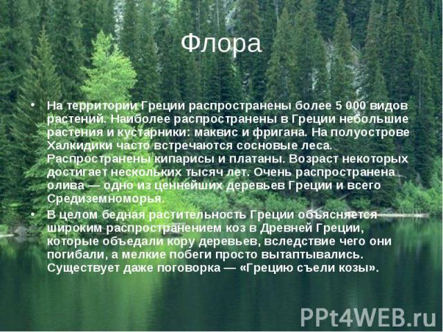 На территории Греции распространены более 5 000 видов растений. Наиболее распространены в Греции небольшие растения и кустарники: маквис и фригана. На полуострове Халкидики часто встречаются сосновые леса. Распространены кипарисы и платаны. Возраст …