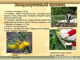 """2 теплицы площадью 228 м2.1-я теплица : томаты """"Яблоня России""""; рассада цветов,"""
