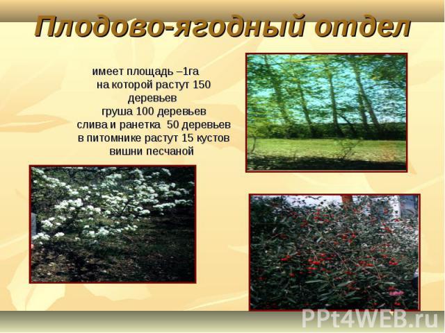 Плодово-ягодный отдел имеет площадь –1га на которой растут 150 деревьев груша 100 деревьевслива и ранетка 50 деревьевв питомнике растут 15 кустов вишни песчаной