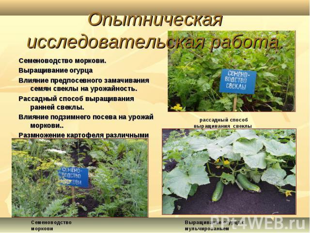Семеноводство моркови.Семеноводство моркови.Выращивание огурцаВлияние предпосевного замачивания семян свеклы на урожайность.Рассадный способ выращивания ранней свеклы.Влияние подзимнего посева на урожай моркови..Размножение картофеля различными способами.