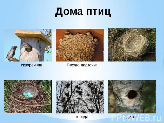 Дома птиц