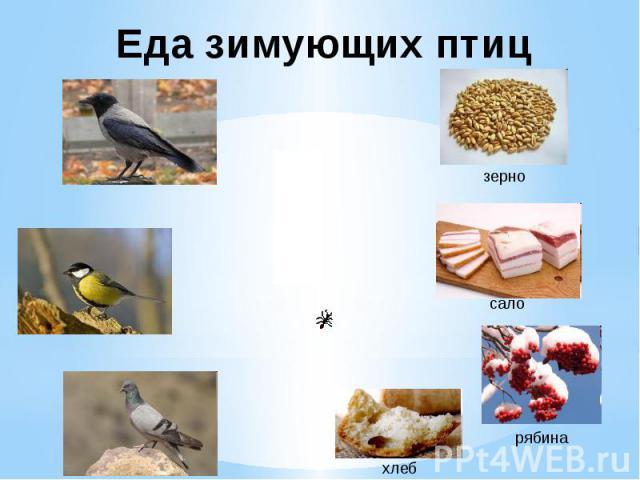Еда зимующих птиц